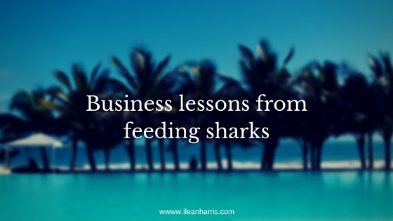 Business lessons from feeding sharks